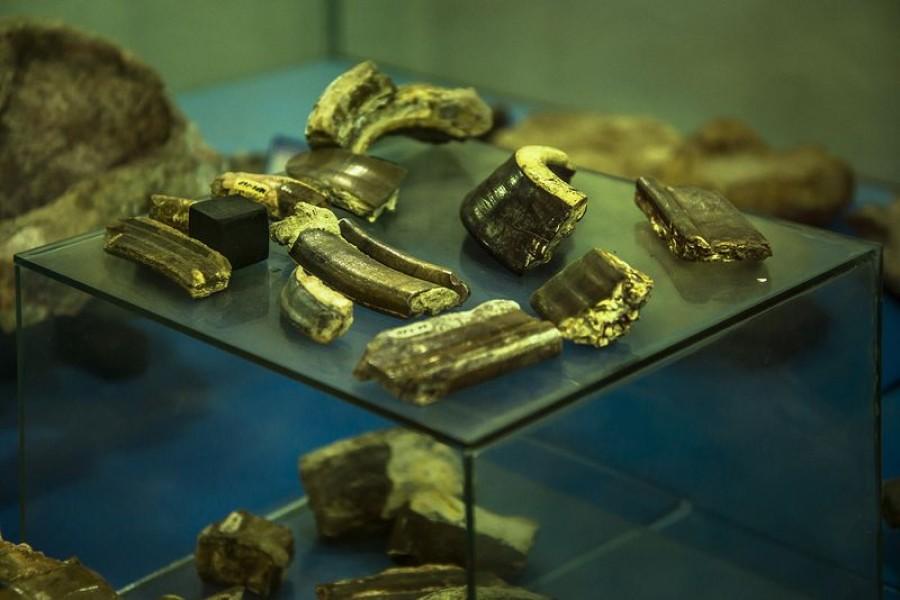 Museo Paleontológico de Villavieja - Municipio de Villavieja